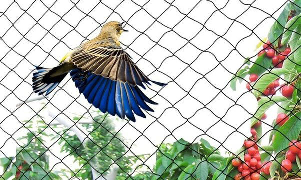 Bird netting in Bannerughatta