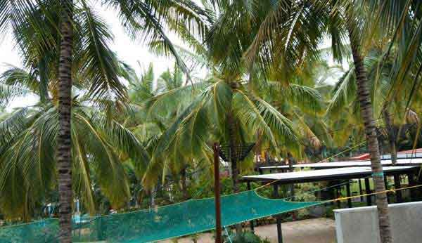 Coconut Tree Net in Hyderabad